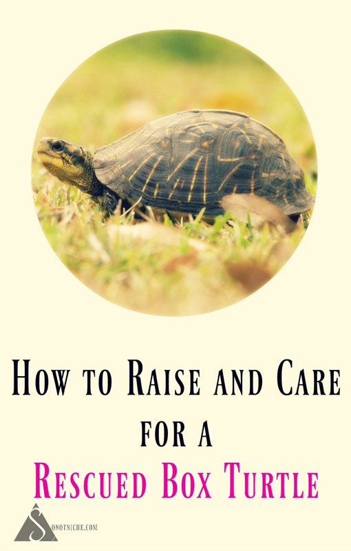 How to Care for a Box Turtle
